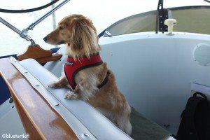 photo of dog on trawler