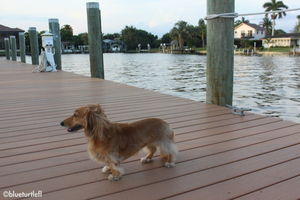 Miss Sophie checking out the docks