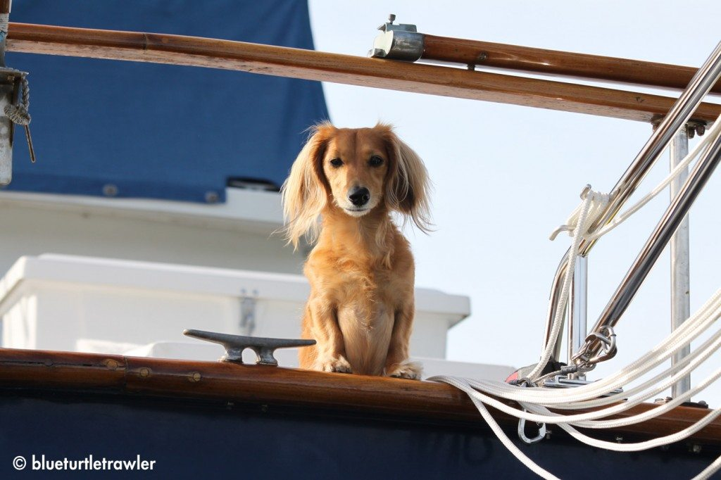 Boat Weenie, Sophie, stayed behind and guarded the boat while we went kayaking