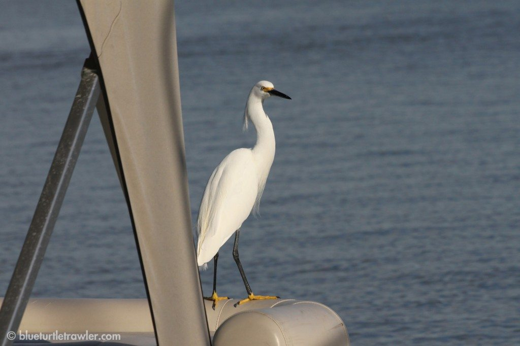 A Snowy Egret hanging out on a rental boat at the marina