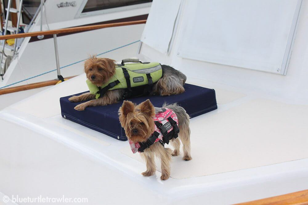 Cody and Cailee (my folk's dogs) guard their boat