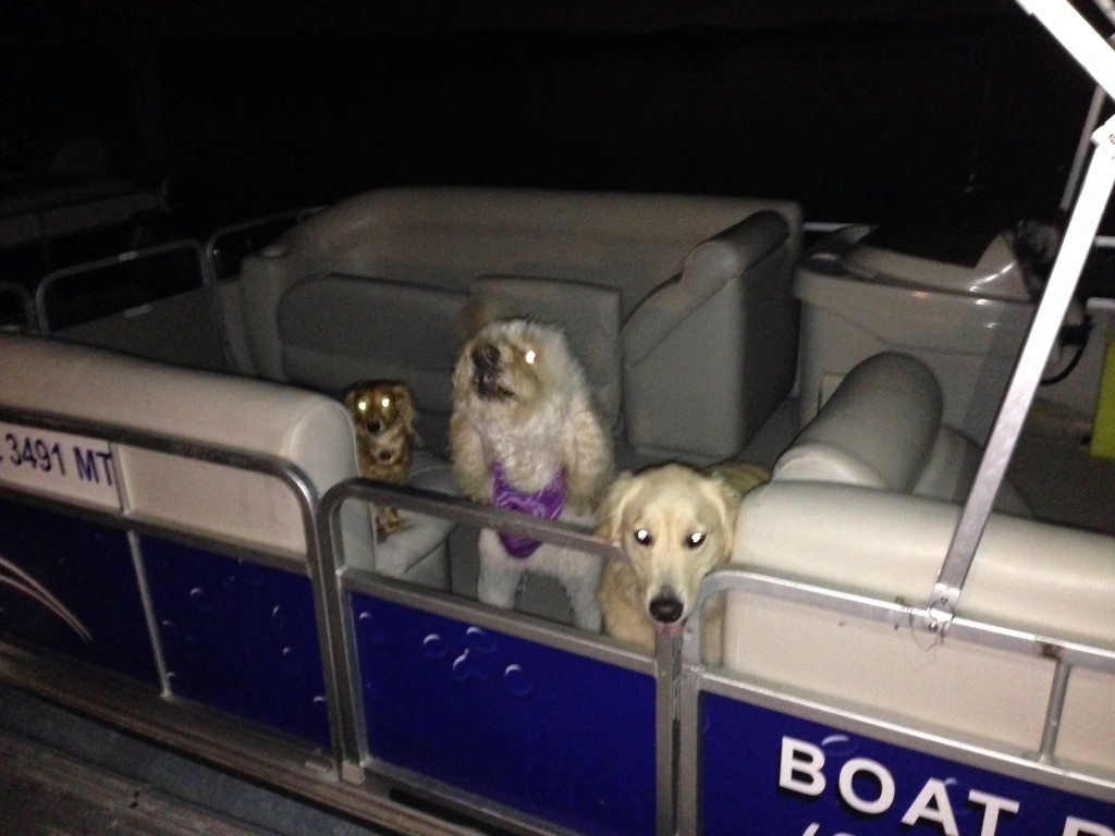 A really terrible nighttime iphone photo but cute that we had all the dogs together (Sophie, Huey and Bailey)