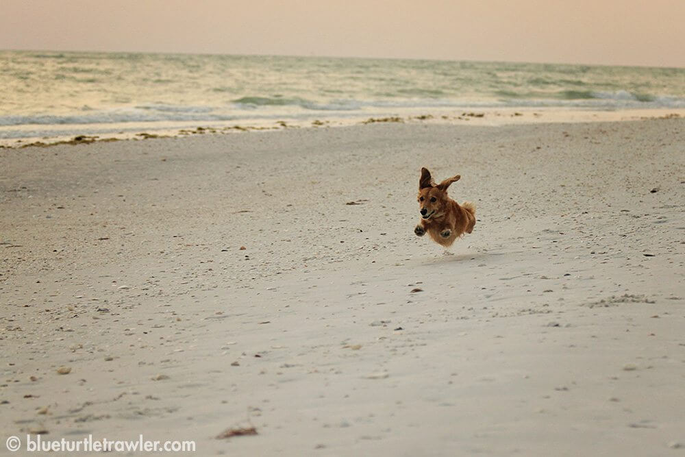 Even Sophie loved frolicking on the empty beach