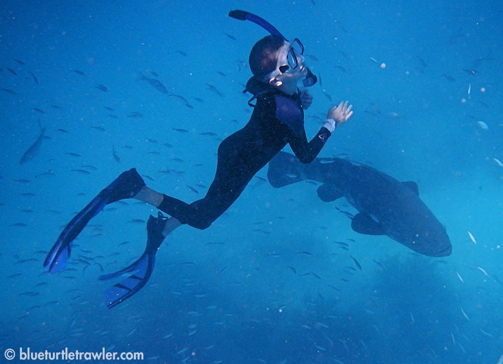 Corey snorkeling and diving down to see the huge grouper