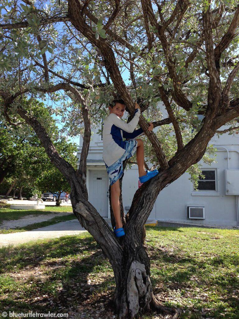 Once ashore, Corey climbs the nearest tree