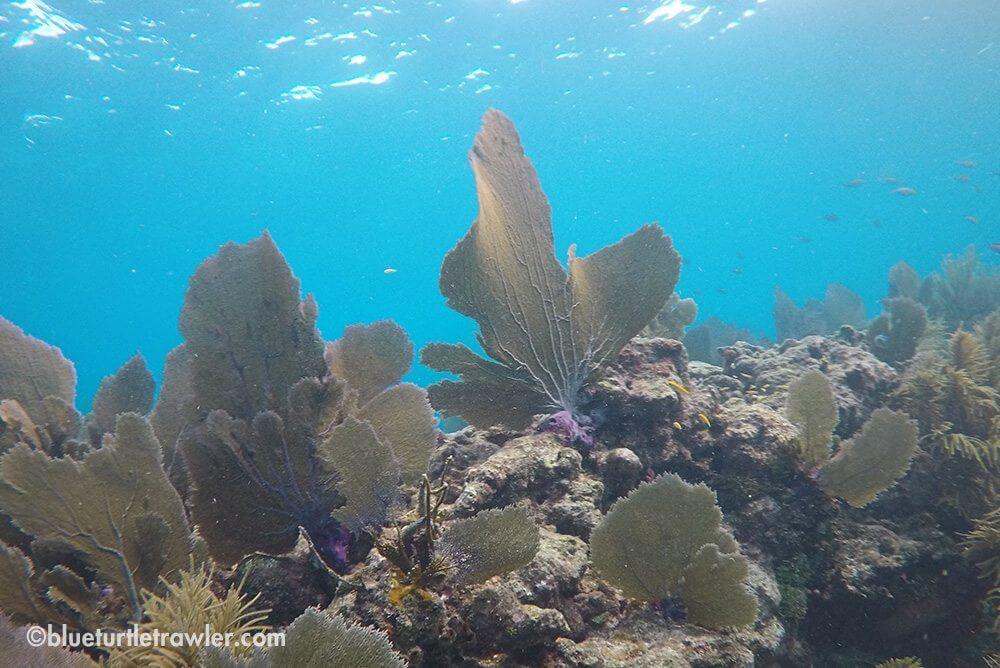 Beautiful sea fan and visibility