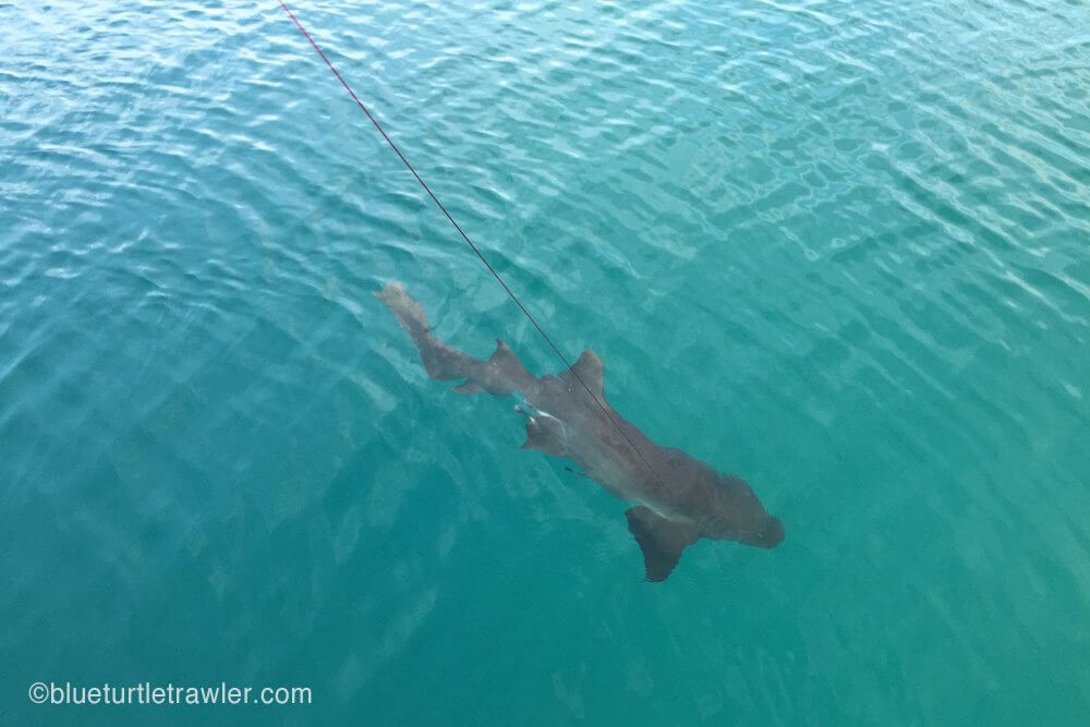 He got the shark most of the way in and then it broke loose.