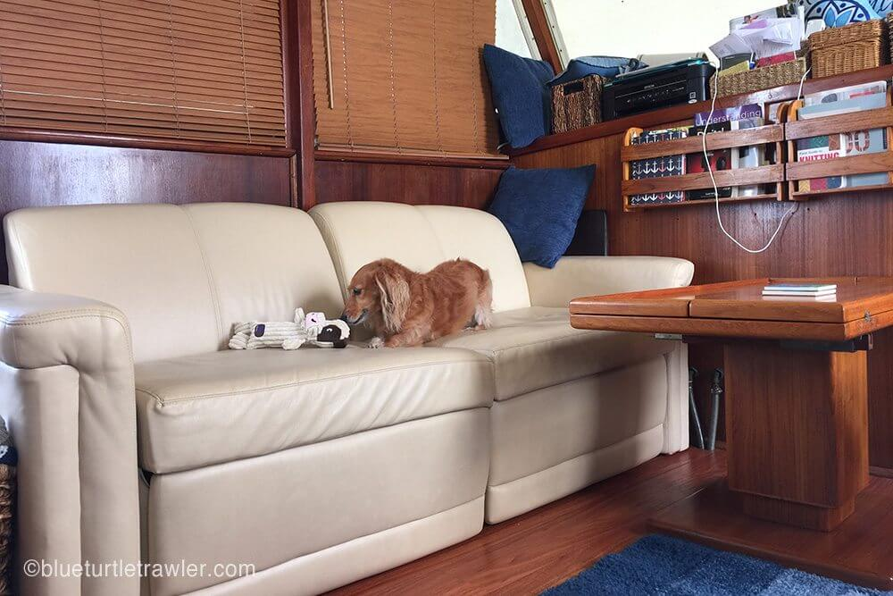Sophie usually sleeps when we are under way, but with the calm seas she decided to play