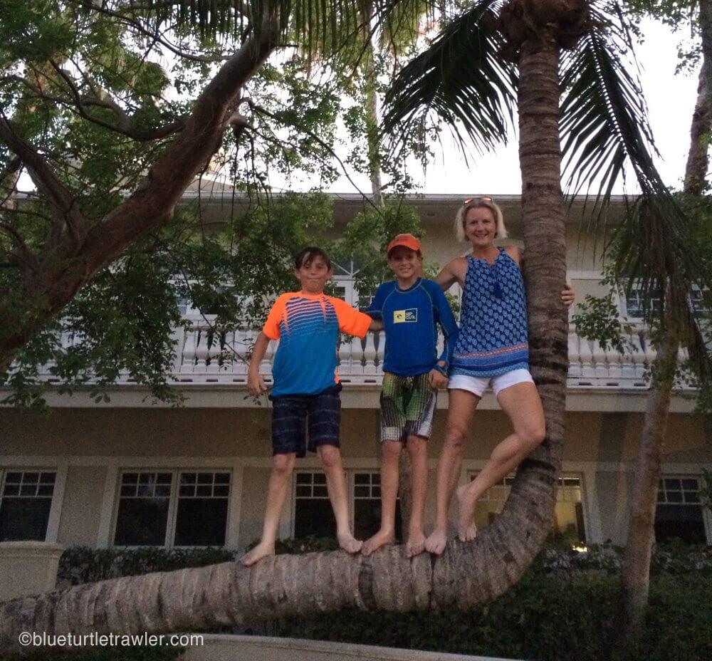 Me and boys climb the crooked tree
