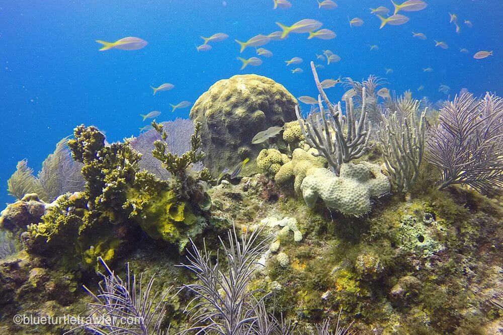 Schools of fish and various forms of coral