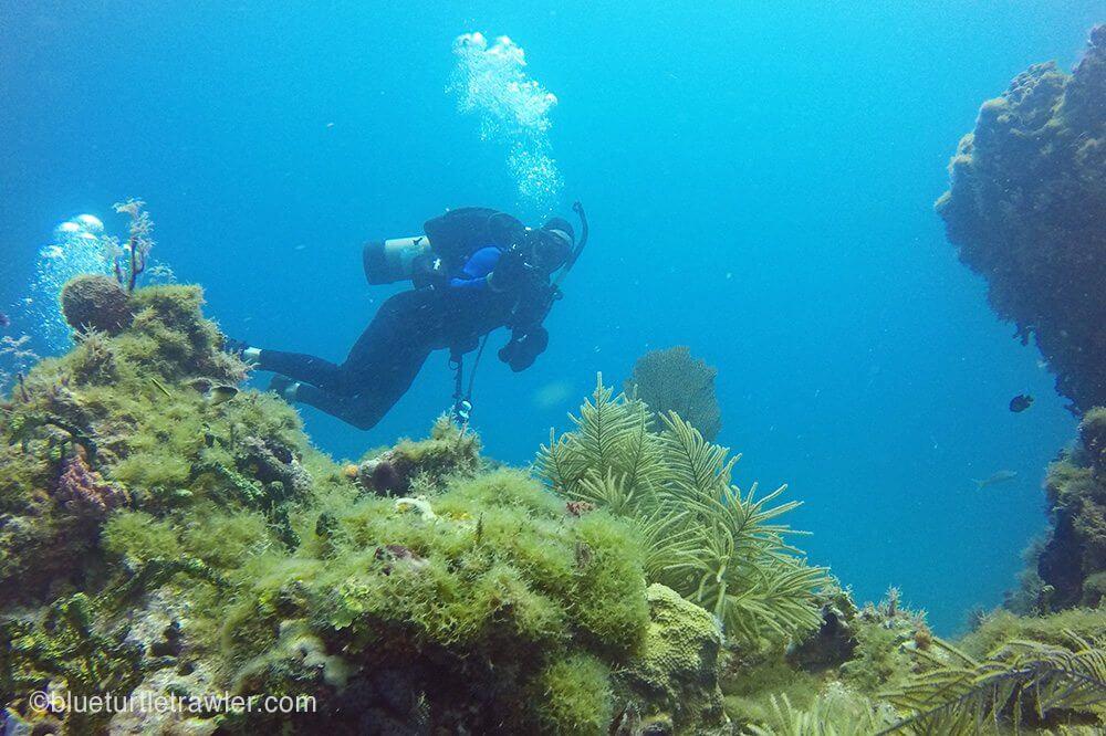 Randy explores the reef