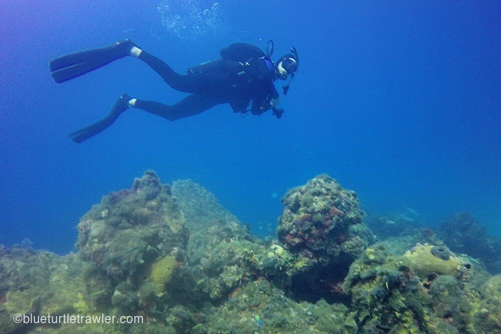 diving dry tortugas