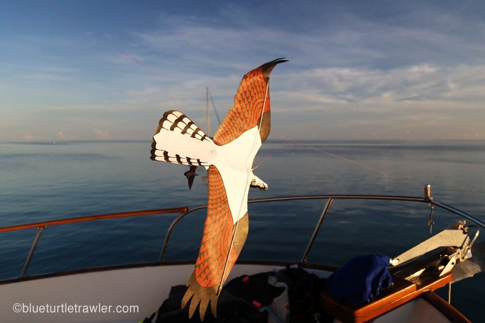 Our egret kite kept the sooty terns off our boat