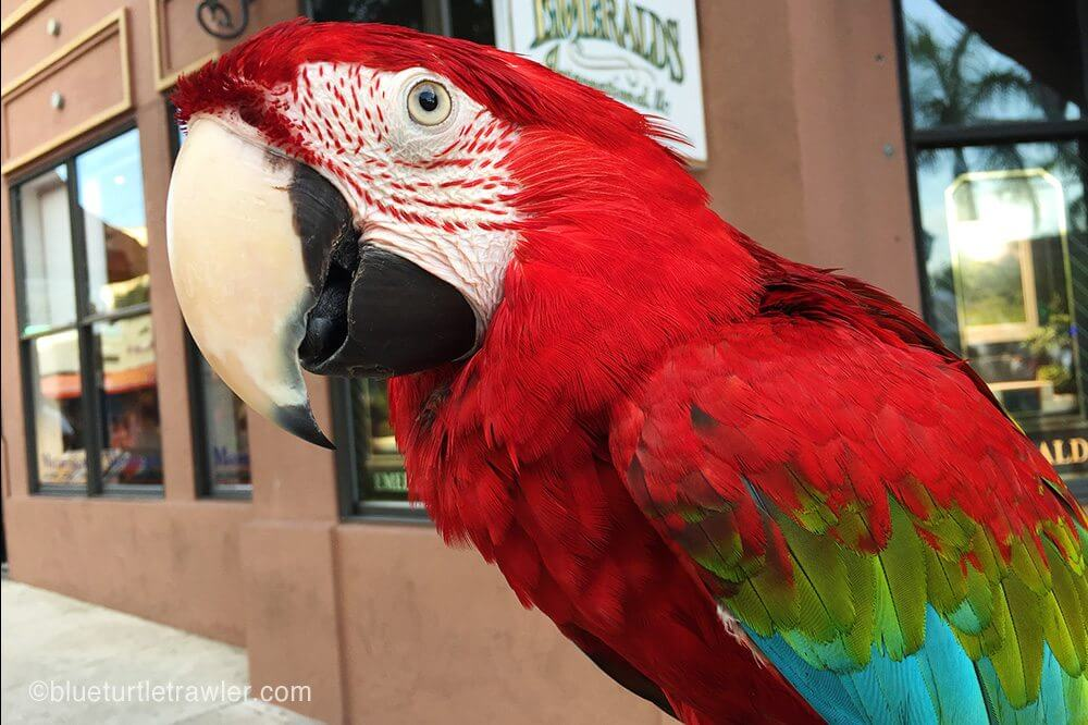 Gizmo, the parrot