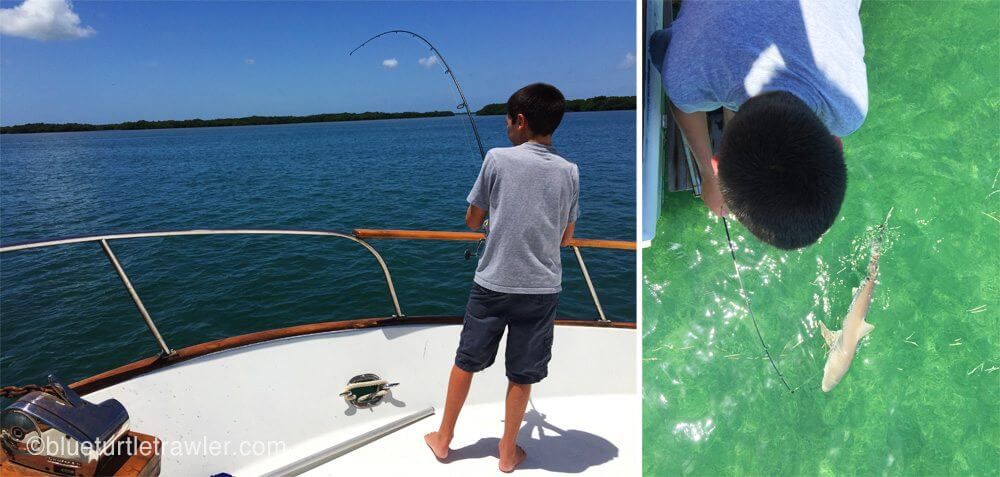 Corey hooks a small bonnet head shark