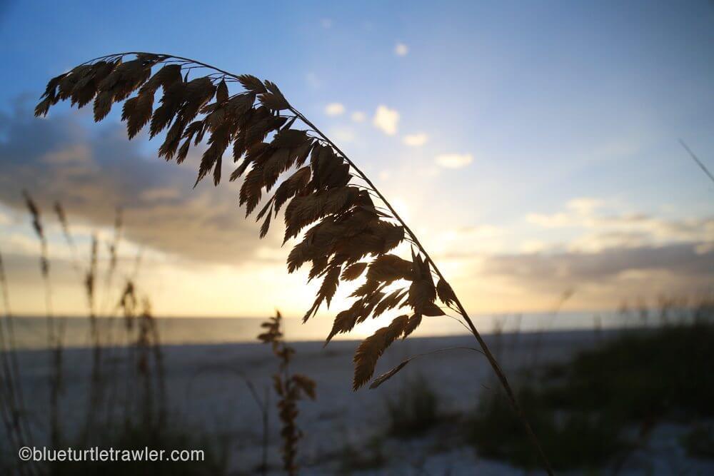 Sea oats and a setting sun