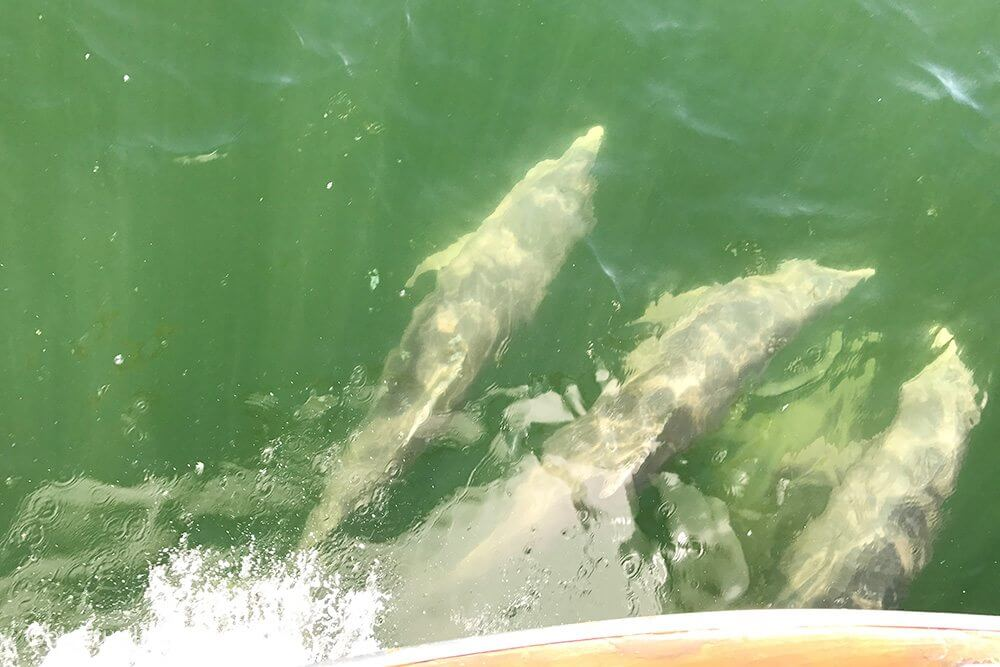 A few of the dolphin we had riding our bow along the way
