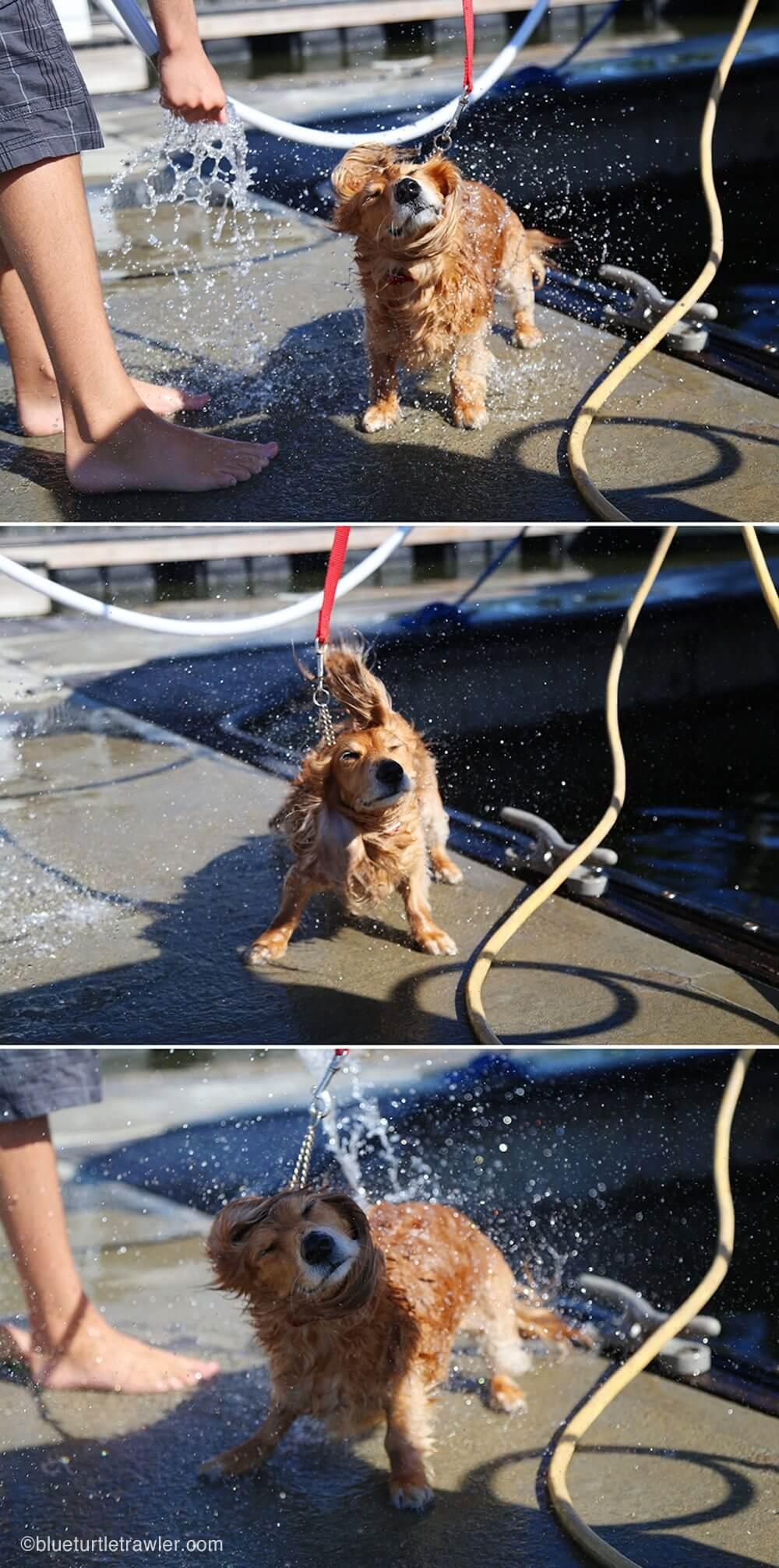 Sophie gets a dock bath at Salty Sam's