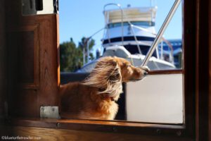 Living aboard with a boat dog