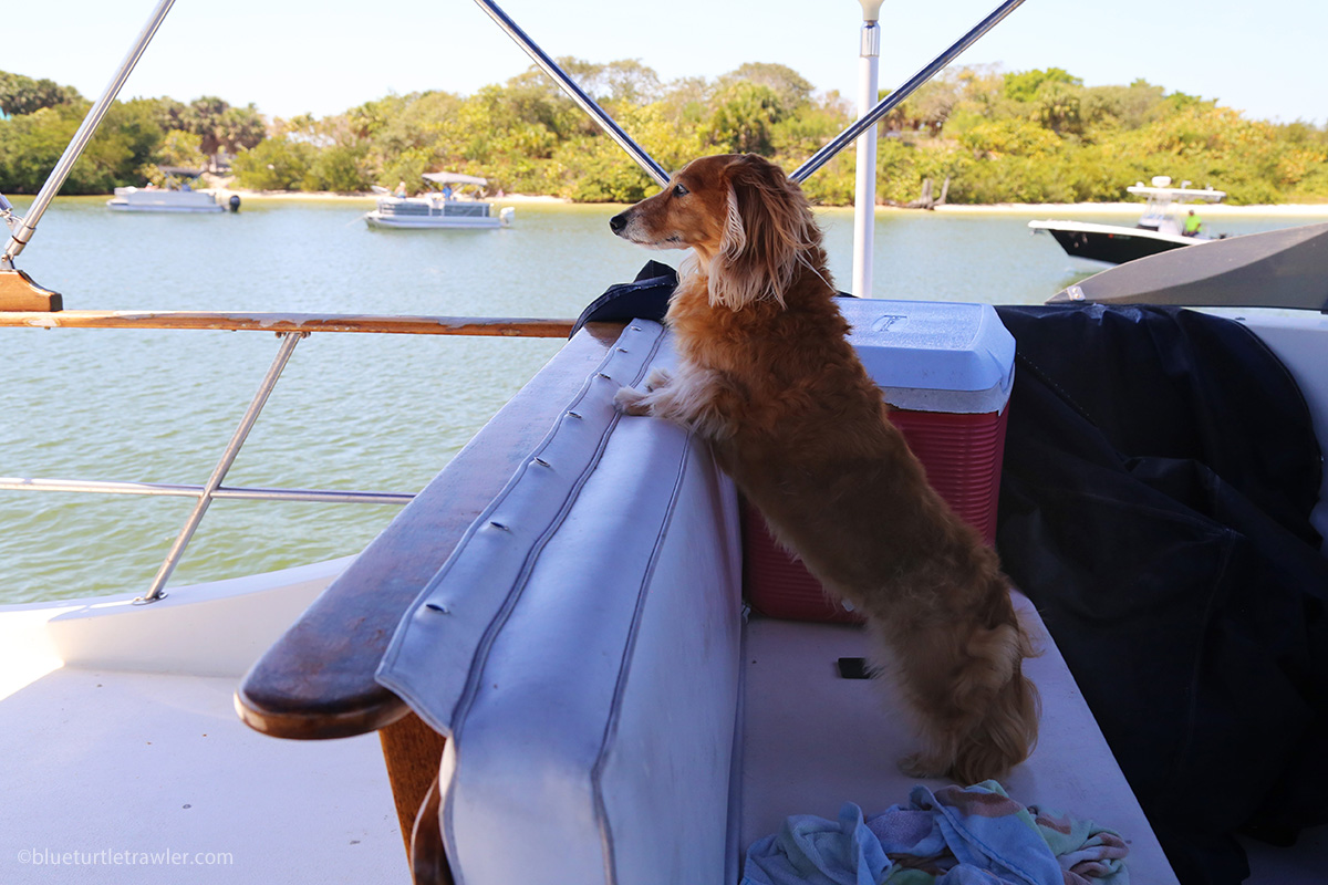 photo of dachshund on boat
